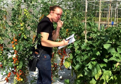 Tomaten Makkelijke Moestuin proeven bij het zadenbedrijf
