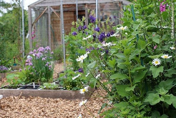 Margrieten, akelei en bieslook in bloei