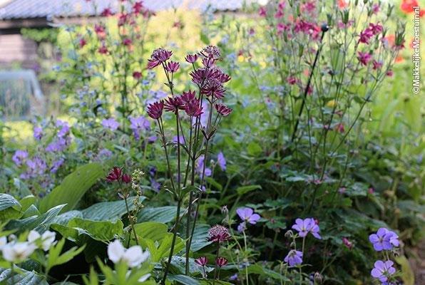 Bijen houden vooral van inheemse bloemen