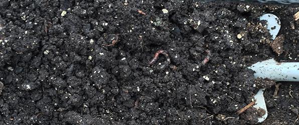 Vol met wormen