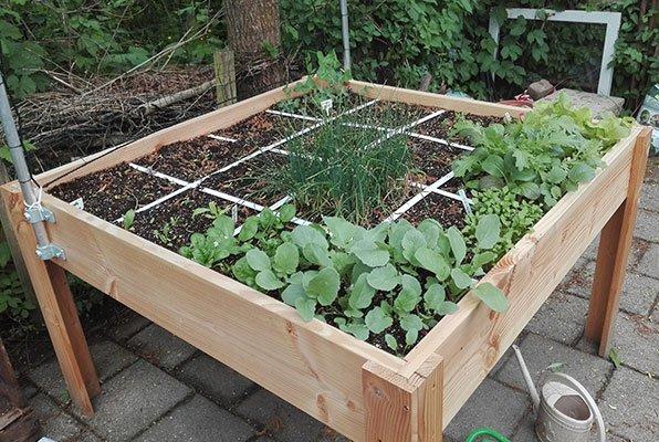 Eerste oogstbare groentes