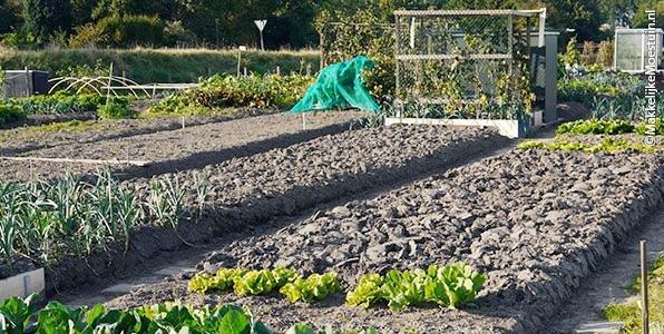 Goed onderhouden gewone moestuin in november; omspitten voor het volgende voorjaar