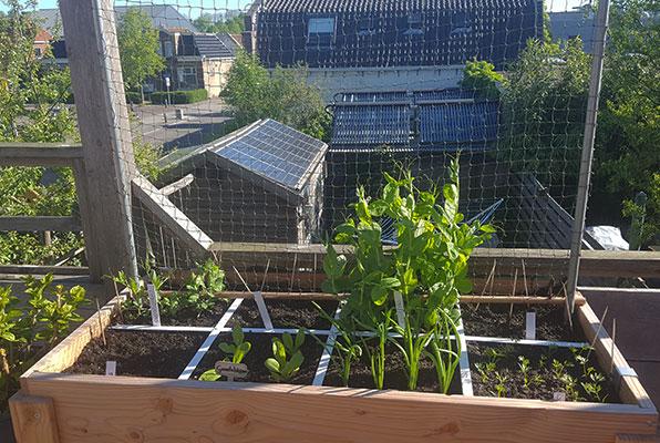 De moestuinbak op het 'eigen' balkon