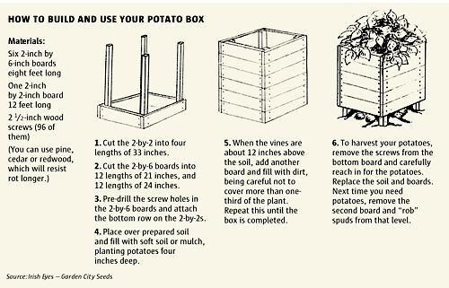 De aardappelkist