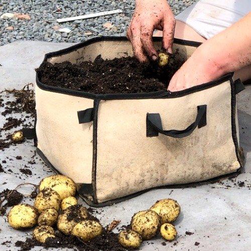 Aardappels oogsten uit de MM-mini