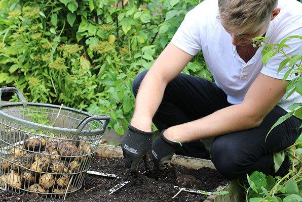 Aardappels oogsten: altijd leuk!