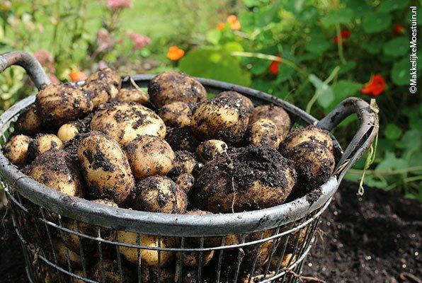 Een deel van de oogst uit mijn aardappelbak