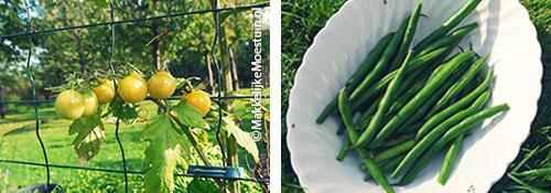 Tomaatjes en stamboontjes