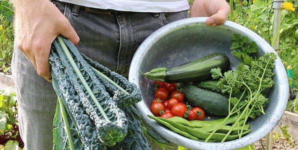 Volop oogsten uit Makkelijke moestuinbakken in juli