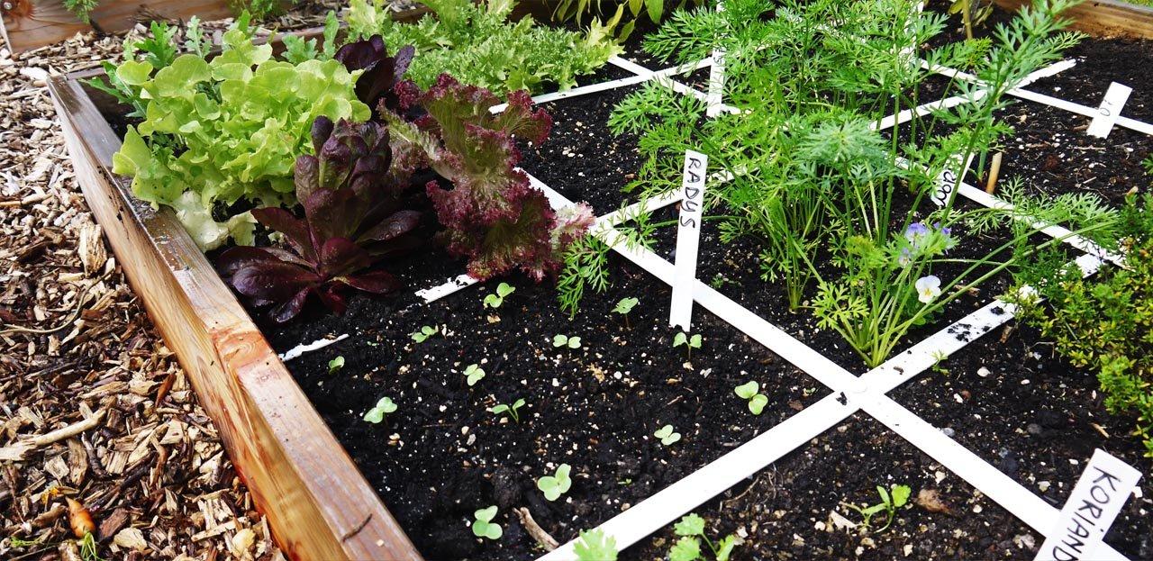 Makkelijke Moestuinmix is goed voor al je groentes, kruiden en bloemen.