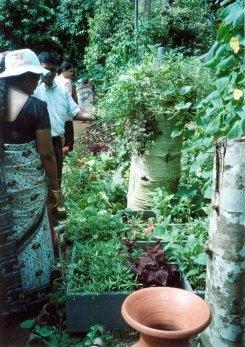 Square Foot Gardening project in Sri Lanka