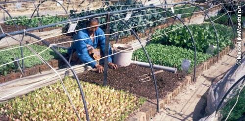 Square Foot Gardening Foundation in India