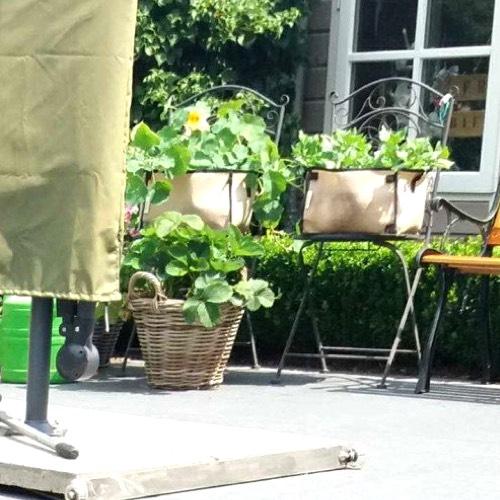 Makkelijke Moestuin mini's op tuinstoeltjes