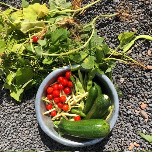 Oogst je groentes zodra ze rijp zijn en laat ze dan niet langer hangen