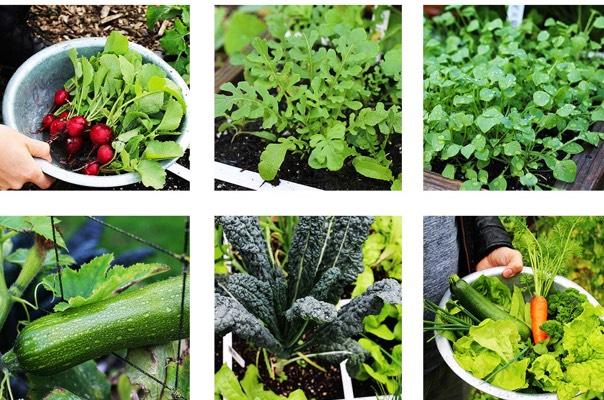 Welke groentes zijn ideaal voor de MM en welke juist niet?