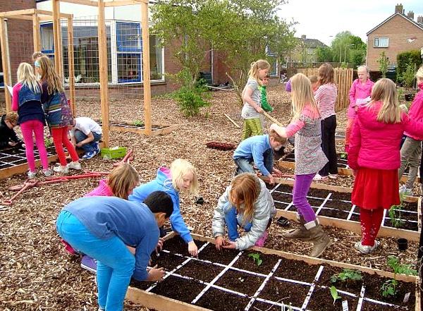 Makkelijke Moestuin schooltuin in Sauwerd