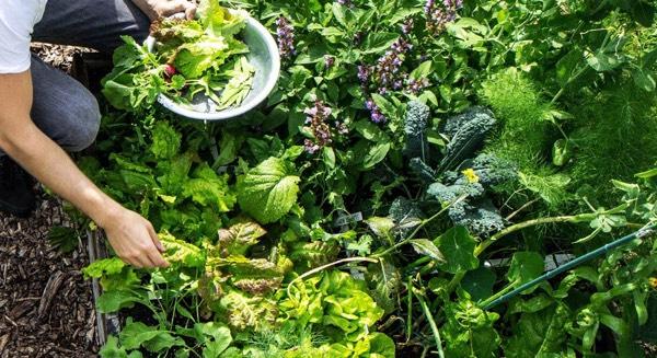 Een Makkelijke Moestuinbak levert megaveel groentes op