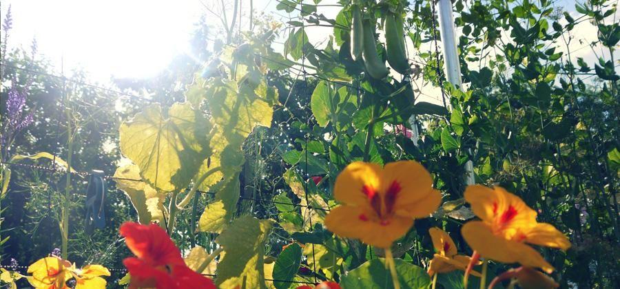 Voldoende zonlicht in de moestuin anders groeien je planten niet