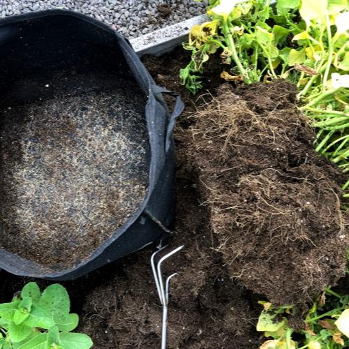 Gezonde wortelgroei in een vilten pot die lucht doorlaat
