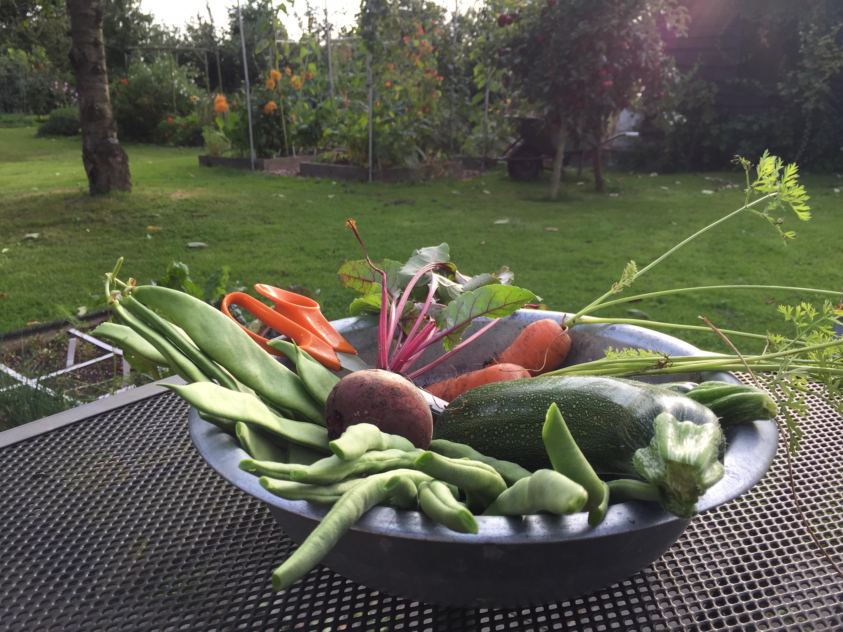 Verse zelfgekweekte groentes