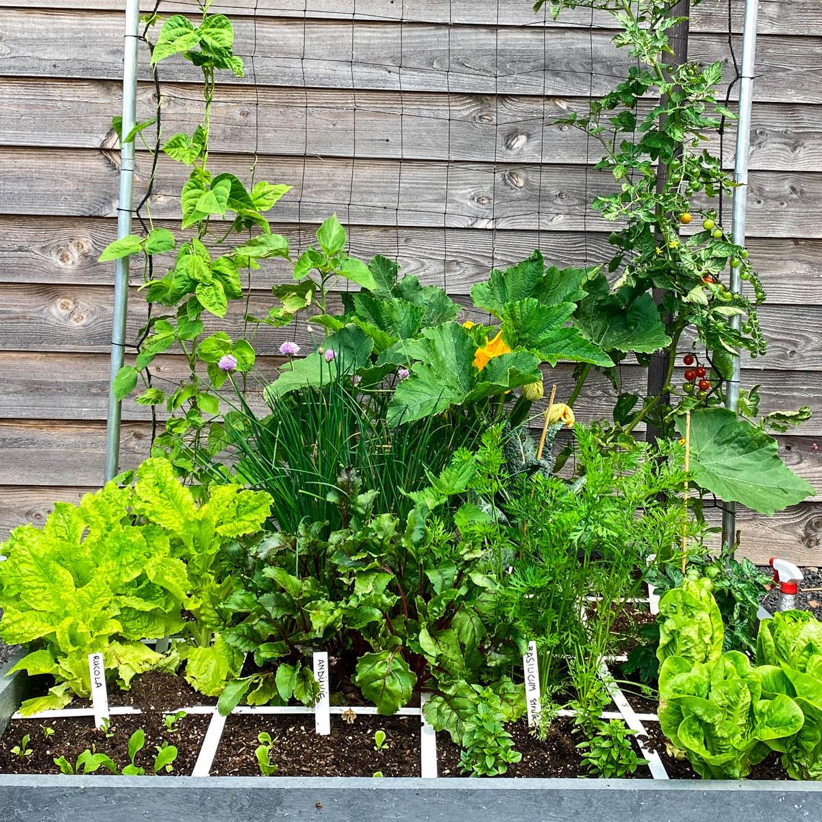 Boontjes, zonnebloemen, courgettes en komkommers in deMM-Hero:ze schieten de lucht in.