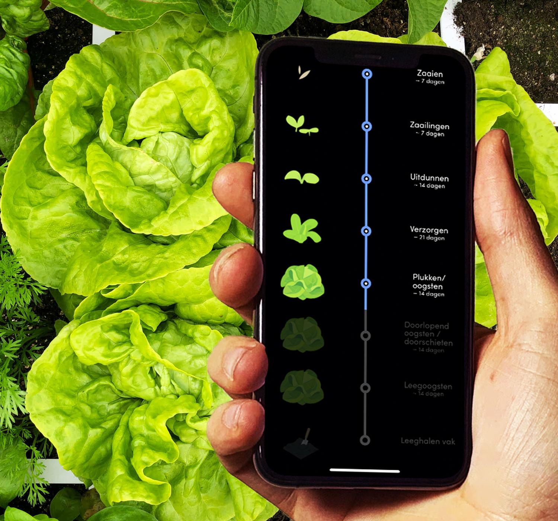 Het proces van zaaien tot oogsten van een kropsla in de app