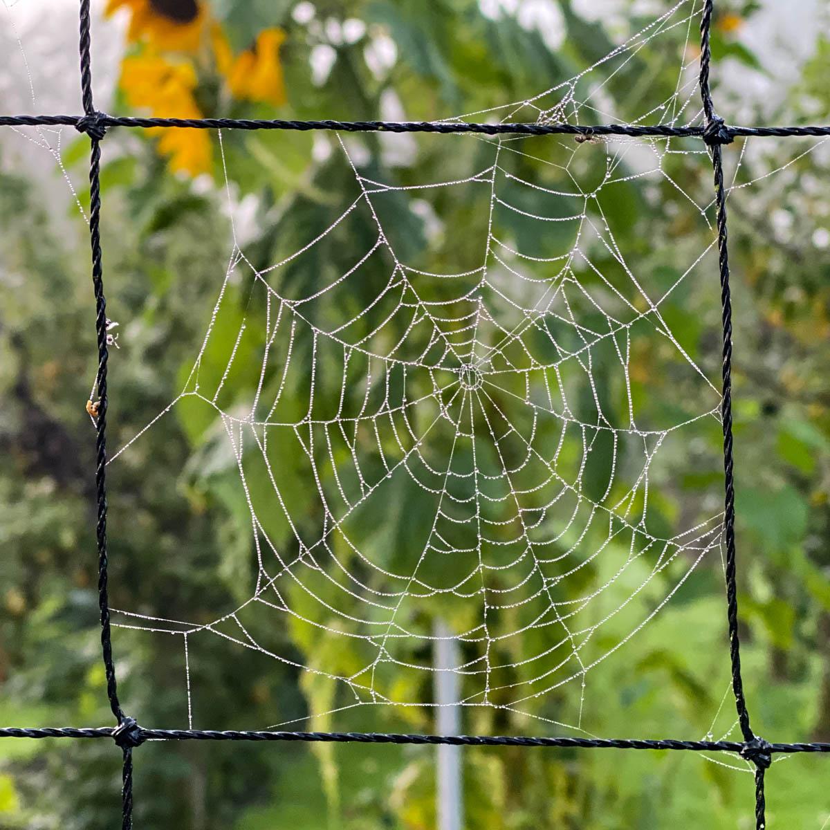Spinnenweb in de Makkelijke Moestuin: voorbode van de herfst