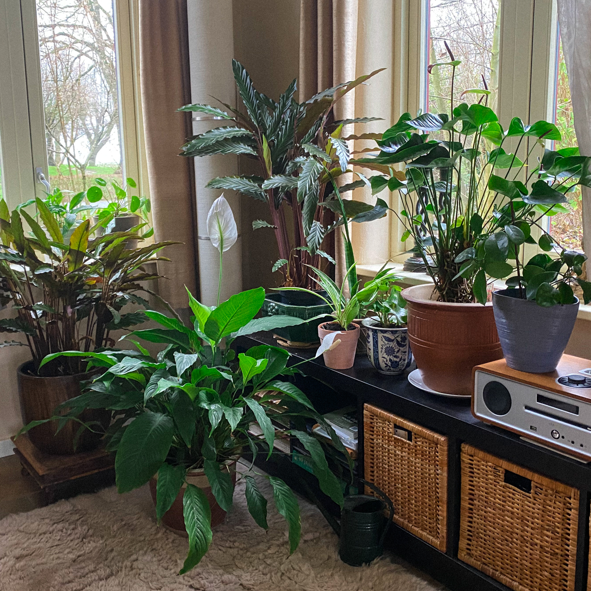 Kamerplanten op Makkelijke Moestuinmix