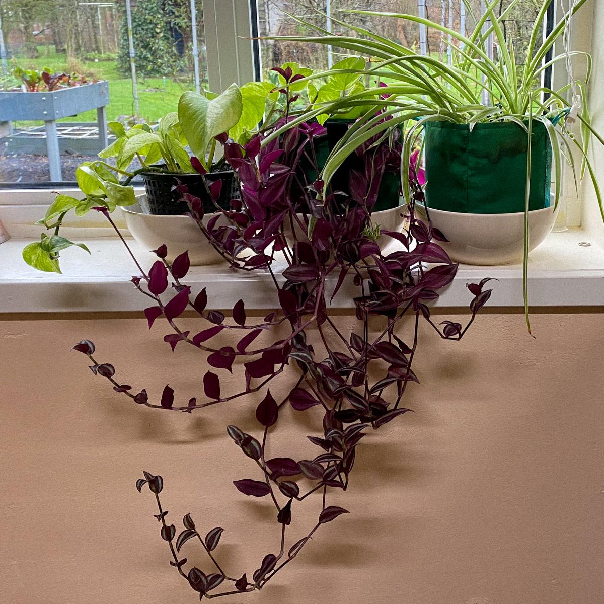 Kamerplanten in growbags en Makkelijke Moestuinmix