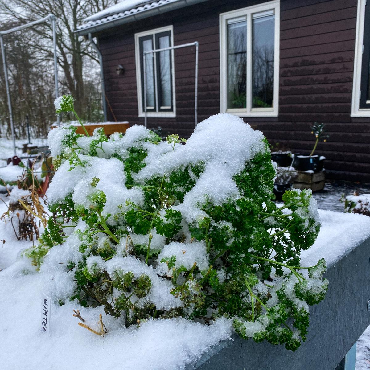 Makkelijke Moestuin in de sneeuw