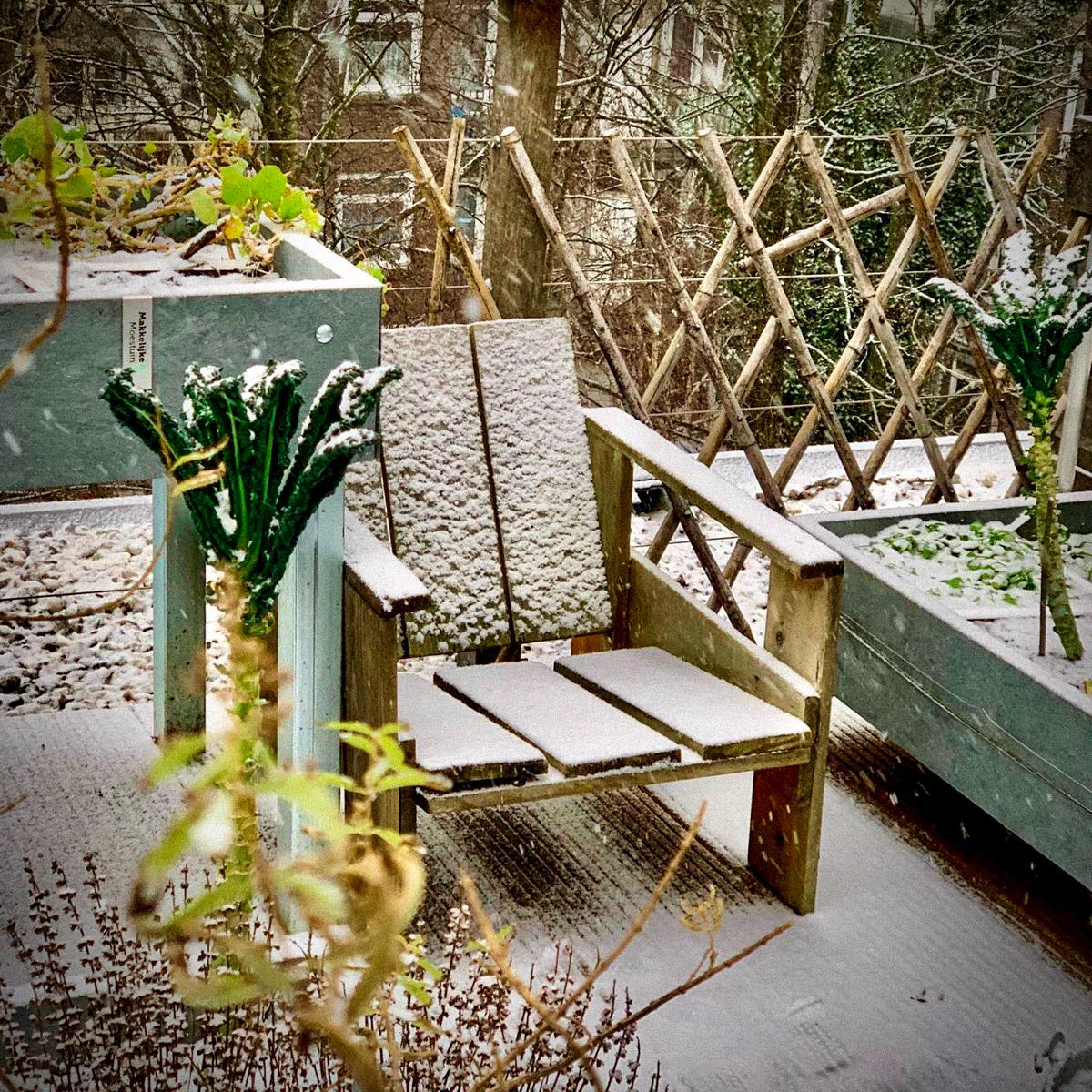 Palmkool in de sneeuw in de Makkelijke Moestuin