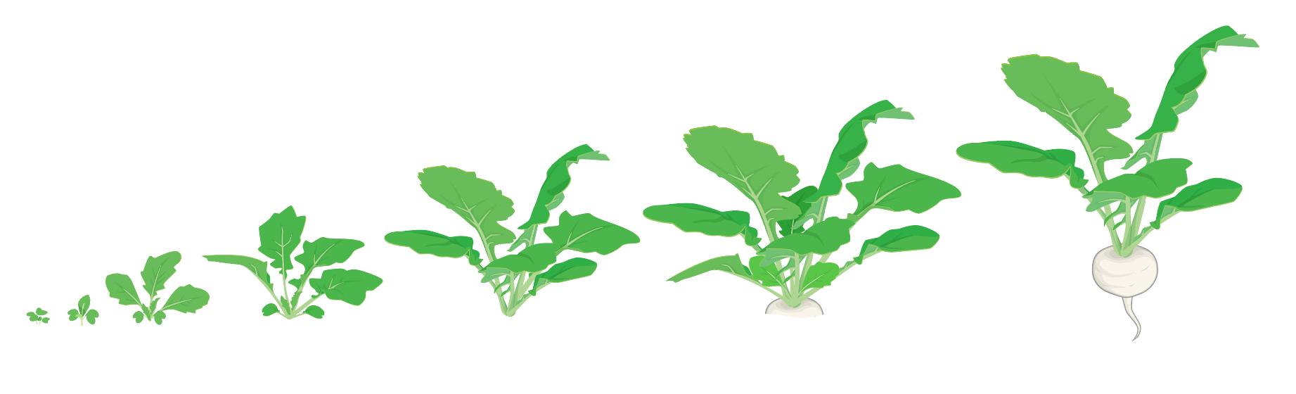 Meiraapjes in Makkelijke Moestuin app: van zaailing tot oogst