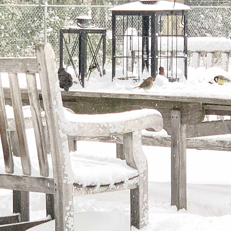 Vogels in de sneeuw en vorst zijn dankbaar voor wat zaden