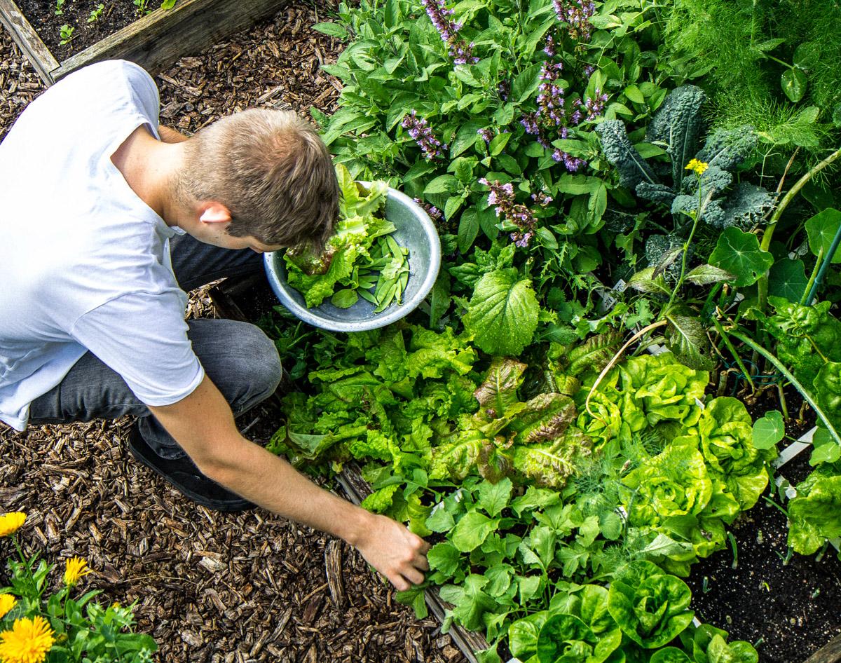 Volop groentes oogsten van een klein oppervlak